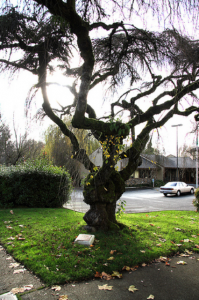 leitgeb tree