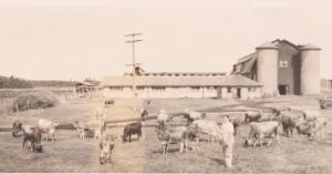 cloverfield barn